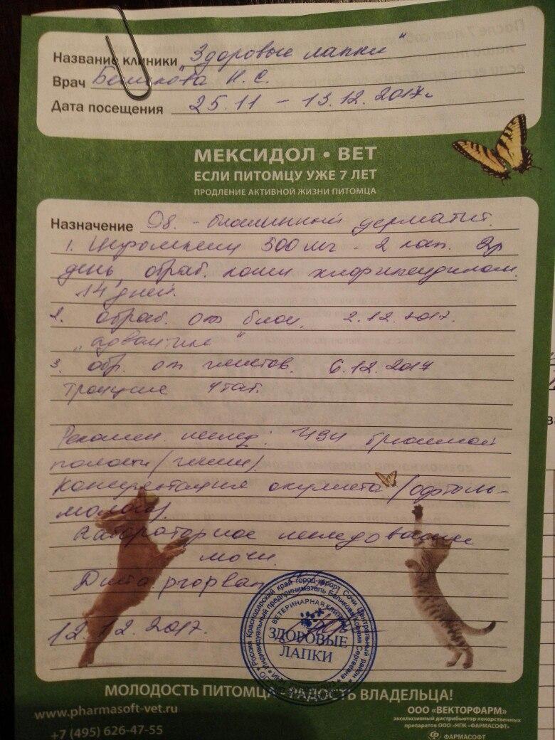 Москва, Саймон, кобель, 17.11.2009 - Страница 2 2tcnLJfWI-E