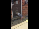 Kid climbs out of the house through the dog flap