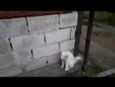 Белый кот возле нашего дома