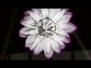 Logistics Lotus Flower Official Music Video