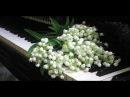 Мельницы моей души - в исполнении оркестра под управлением Поля Мориа