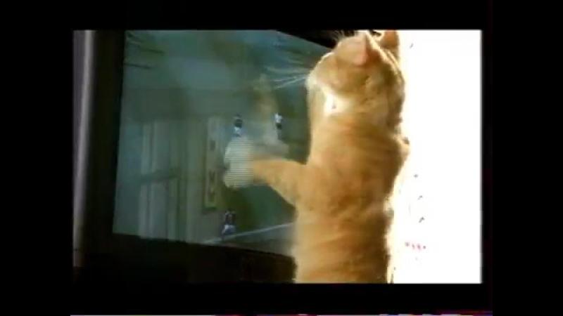 Рекламный блок (ОРТ, 1998) Chappi, Garnier, Vanish, Kitekat, Mynthon, RC, Mertinger