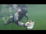 В Сети появилось видео подводной охоты Путина на щуку