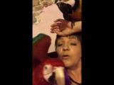 Говорящие попугаи ара