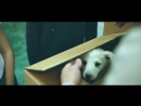 Преданность Собачья Без Границ
