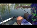 Рыбалка. Карп , карась в камышах на поплавок. My fishing