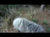 Встреча в горах байкер VS баран
