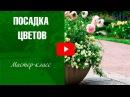 Посадка цветов в кашпо Садовый декор хитсад 🌼 Мастер класс hitsadtv