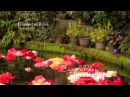Healing And Relaxing Music For Meditation (Garden Of Love) - Pablo Arellano
