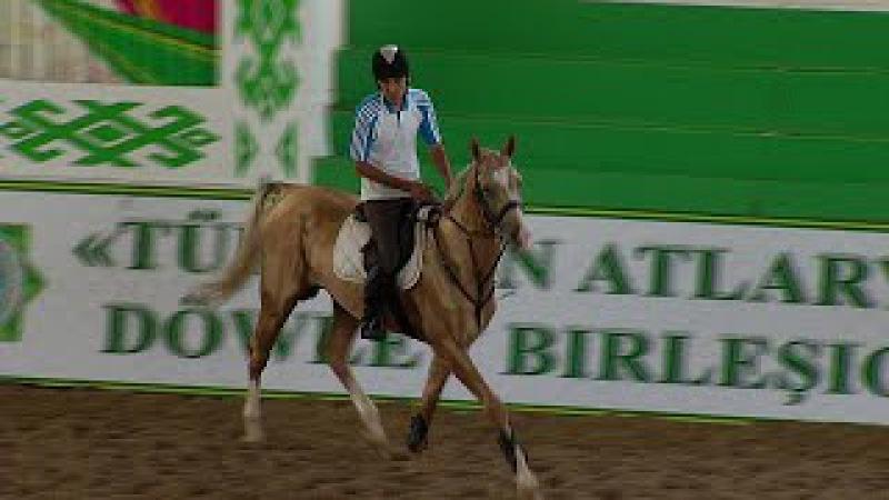 Türkmenistan'ın dünyaca ünlü Ahal Teke cinsi atları