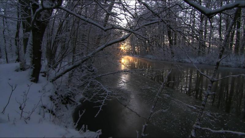 Дикая природа Германии. Шпреевальд. 2011