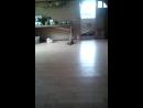 кошка играет с птичкай