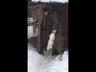Кролька