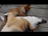 Я на солнышке лежу..и на лисёнка не гляжу...все лежу и лежу...