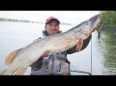О такой рыбалке можно мечтать ЩУКИ МОНСТРЫ В ЛОМОВОМ КОРЯЖНИКЕ