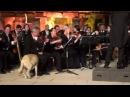 Триумф пса на концерте симфонического оркестра