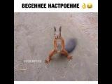 Белка танцует под