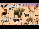 Урок окружающего мира на тему Какие бывают животные.
