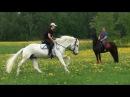 Летние лошади и собаки - красота!