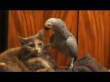 Попугай разговаривает с котом. Супер прикол