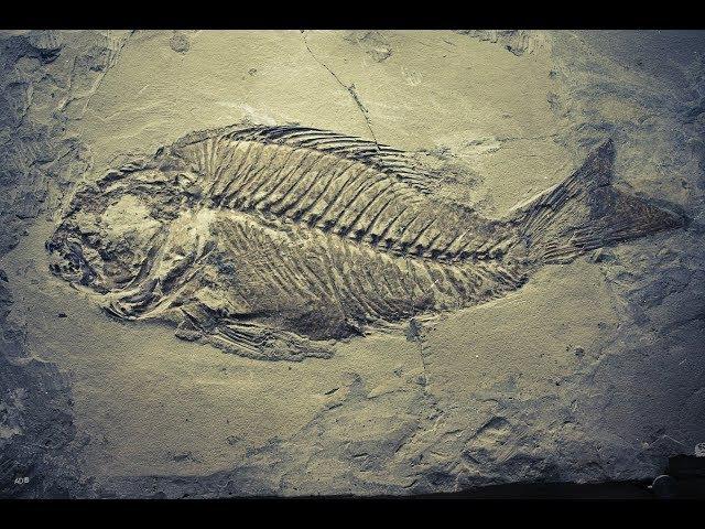 Современная палеонтология:новая история органического мира. Лекция №3