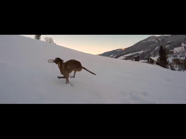 2 Magyar Vizsla's and Feiyu Tech G4S Test with GoPro Black