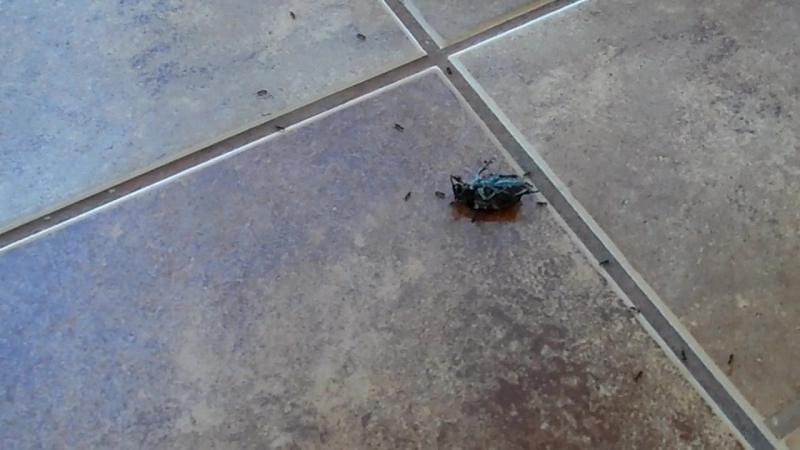Танец жука