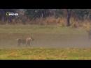 Хищники Африки (2011) (2 серия)