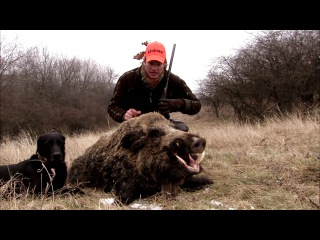 🎬 Driven Wild Boar Hunt in Hungary   Best scenes from hunting season 2016 - Ultimate Hunting