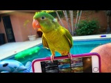 Funny Birds Imitating Electronic Sounds - Parrots Mimic Alarm, Ringtone and More Compilation 2017