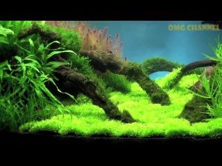 Aquascaping / Aquarium Ideas from The Art of the Planted Aquarium