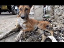 The paralysed dog who never gave up Sydney s amazing rescue story