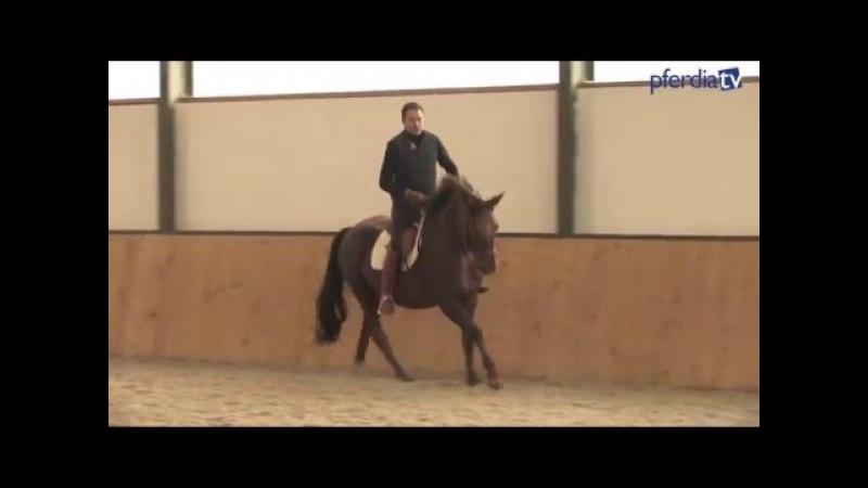 Junge Pferde behutsam ausbilden: Lösende Arbeit, Fleiß entwickeln, Selbsthaltung