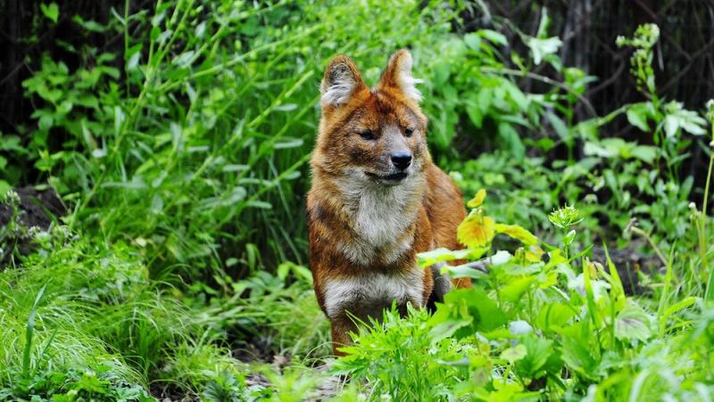 Приморский Сафари-парк. Парк хищных зверей. Июль 2017 года.