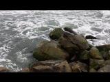 Чёрное море, Джубга 😎😎😎