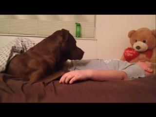 Собака Кольт і його господарка Жанаі
