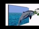 Дельфин и русалка. Алушта 2017