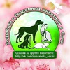 Зоозабота о бездомных животных в Сочи