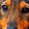 Липецкое общество защиты животных