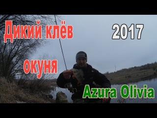 Окунь ловля на микроджиг , Зима)) Azura Olivia