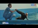 В Геленджикском сафари-парке поселилась калифорнийская морская львица
