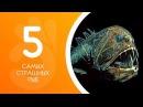 5 самых страшных рыб