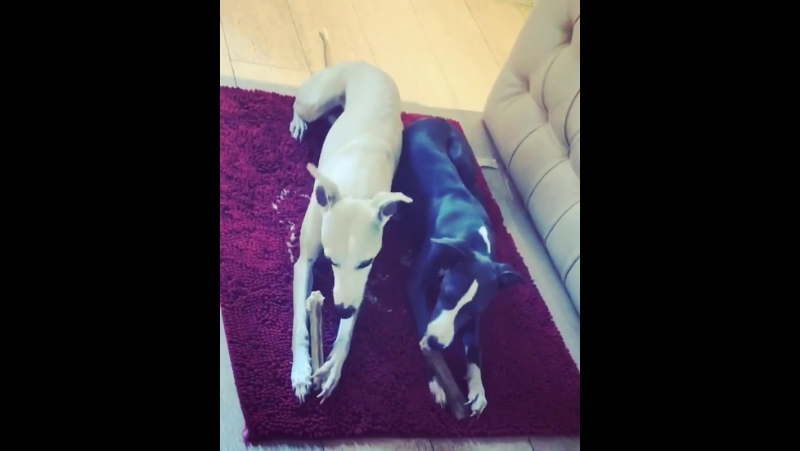 Neil and amber breakfast whippetwhippetsofinstag... Рим 22.08.2017