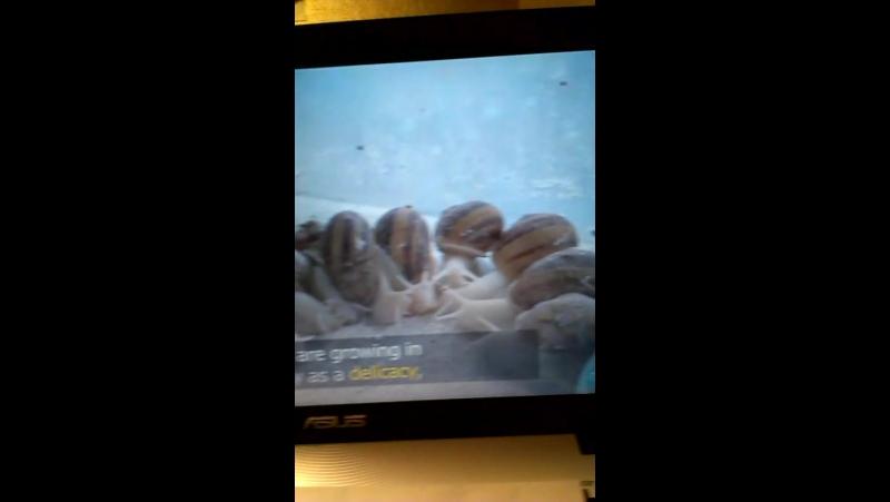 BBC News_Snail Farming_Klim (13y.o.)