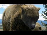 Documentary - Ice Age Giants 2of3 Land of the Cave Bear