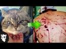 10 ФАКТОВ ЧТО КОШКА ОПАСНЕЕ И СИЛЬНЕЕ ТЕБЯ Белый кот