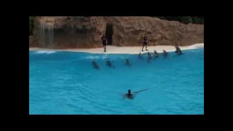 Танец дельфинов.