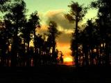 Релакс для Сна Вечер в лесу! 8 Часов! Relaxing Nature Sounds
