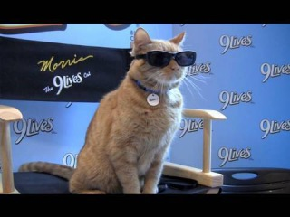 The Real Morris the Cat With Sunglasses