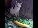 Cat No Banana - He Not Like the Banana (Lyric Video)